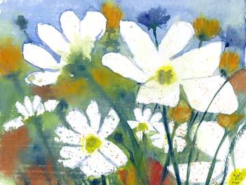Canvas doek Weisse Cosmea und Mohn