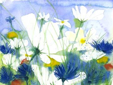 Canvas doek Weisse Cosmea und Kornblumen