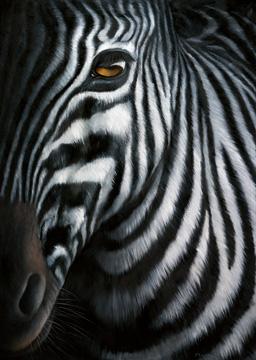Canvas doek Zebra I