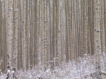 Canvas doek Winterharmonie