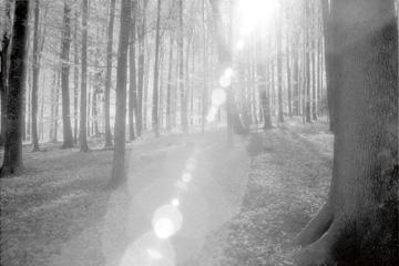 Canvas doek Wald
