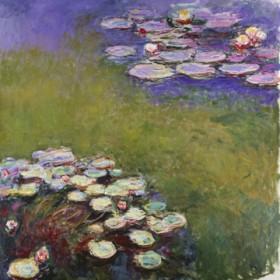 Canvas schilderij Seerosen