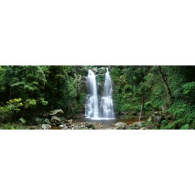 Canvas schilderij Minnamurra Rainforest