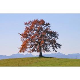 Canvas schilderij Der Baum
