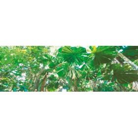 Canvas schilderij Rainforest Canopies