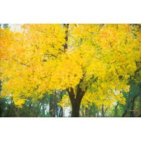 Canvas schilderij Change of Seasons