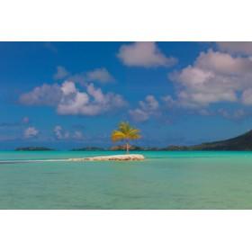 Canvas schilderij Bora Bora Lone Palm
