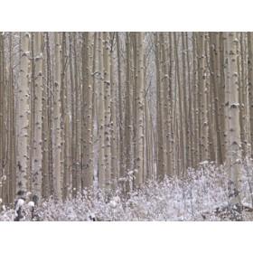 Canvas schilderij Winterharmonie