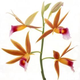 Canvas schilderij Flower