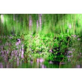 Canvas schilderij Amazonas I