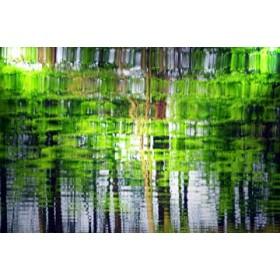 Canvas schilderij Amazonas II