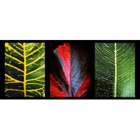 Canvas schilderij Three Leaves