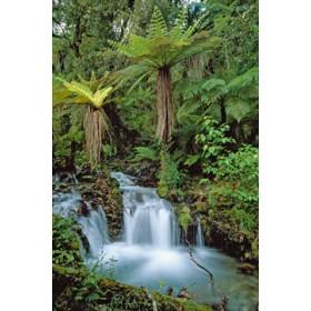 Canvas schilderij Creek with tree ferns