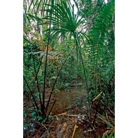 Canvas schilderij Flood Area of Rainforest
