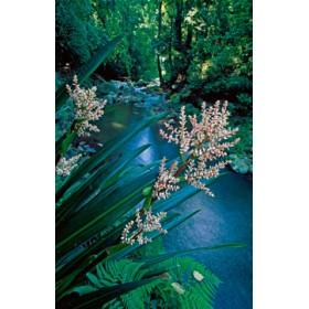 Canvas schilderij Canungra Creek