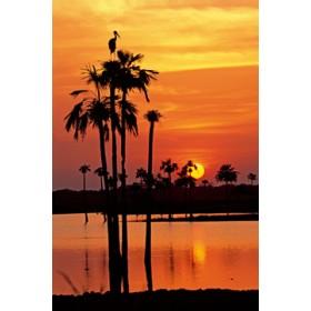 Canvas schilderij Sunset, Maguari Stork I