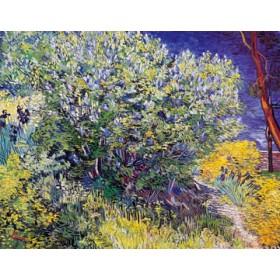 Canvas schilderij Lillas