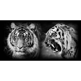 Aluminium schilderij Tiger Combo fotokunst