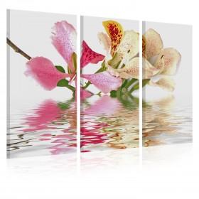Foto schilderij - Orchideeën met roze vlekken