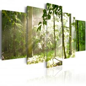 Foto schilderij - Zonnestralen in het bos