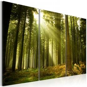 Foto schilderij - Bos - schoonheid van de natuur