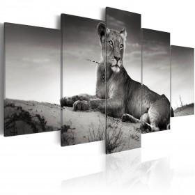 Foto schilderij - Lioness in a desert