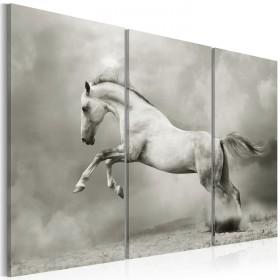Foto schilderij - A white horse in motion