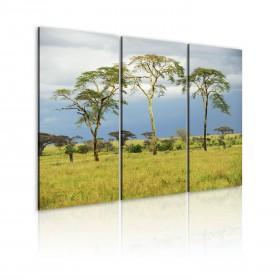 Foto schilderij - African flora