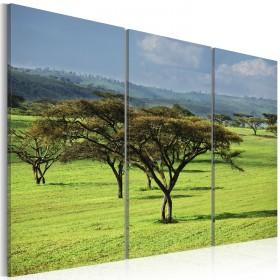 Foto schilderij - African acacias