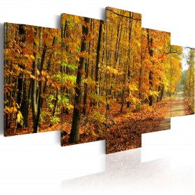 Foto schilderij - An alley among colorful leaves