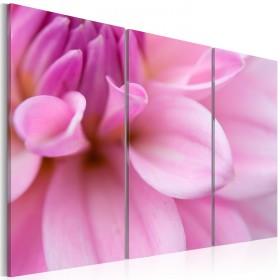 Foto schilderij - Roze dahlia