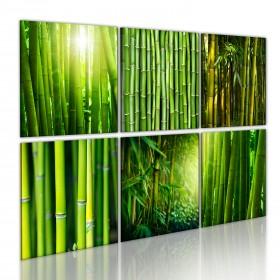 Foto schilderij - Bamboo has many faces