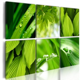 Foto schilderij - Fresh green leaves