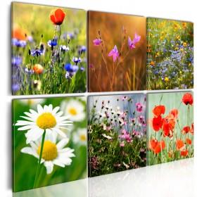 Foto schilderij - One thousand colors meadow