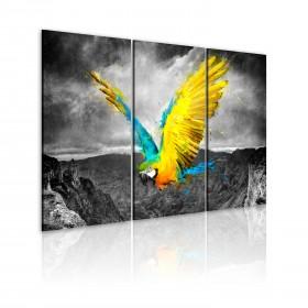 Foto schilderij - Vogel-van-paradijs