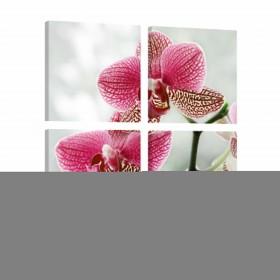 Foto schilderij - Fancy orchidee