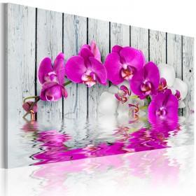 Foto schilderij - harmonie: orchidee