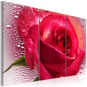 Foto schilderij - Lady Rose - triptych