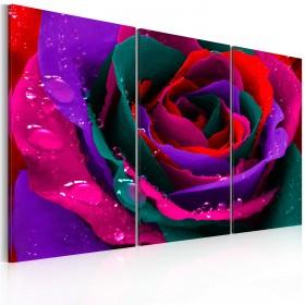 Foto schilderij - Regenboogkleurige rose