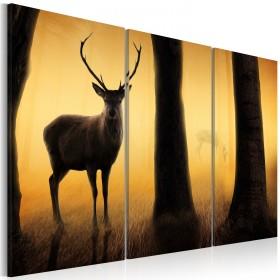 Foto schilderij - Boswachter