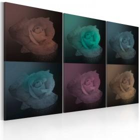 Foto schilderij - Zes schaduwen van roze