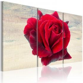 Foto schilderij - Lyrical rose