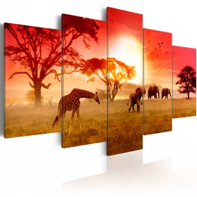 Foto schilderij - Sunny colours of Africa