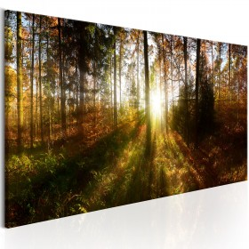 Foto schilderij - Beautiful Forest