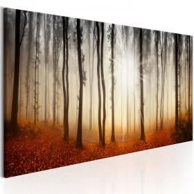 Foto schilderij - Autumnal Fog