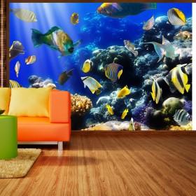 Fotobehang - Underwater adventure