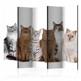 Kamerscherm - Sweet Cats II